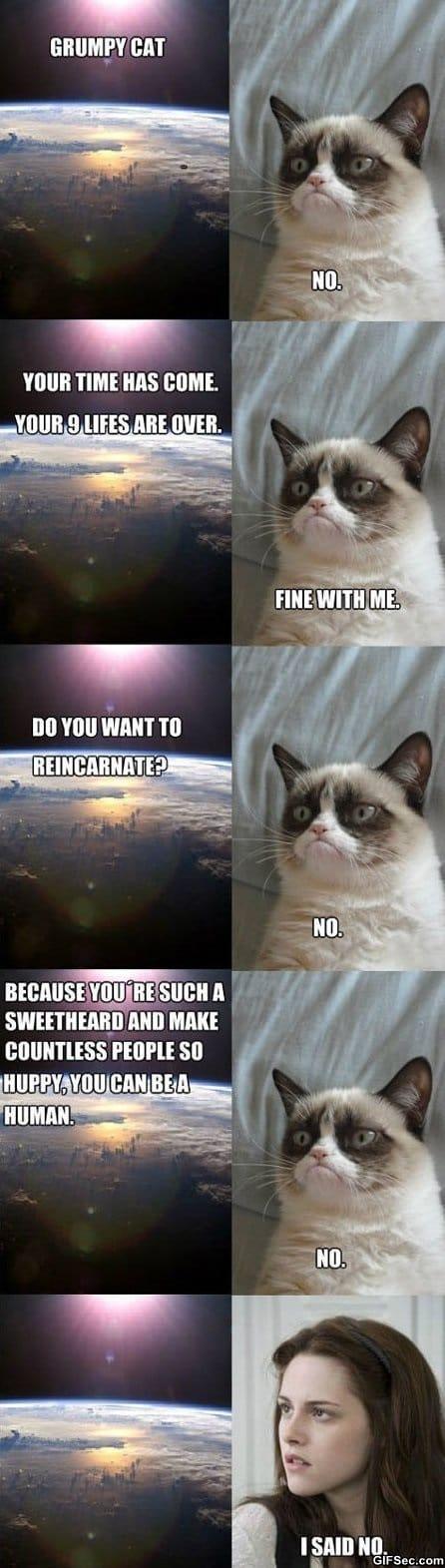 MEMES - Grumpy Cat