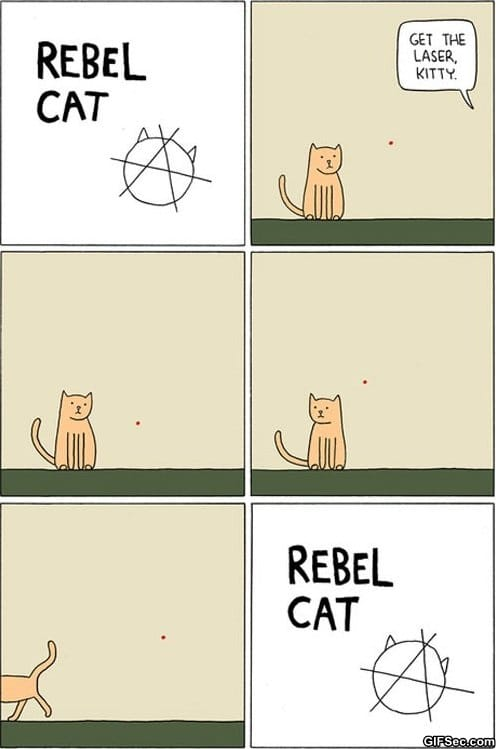 funny-pictures-rebel-cat