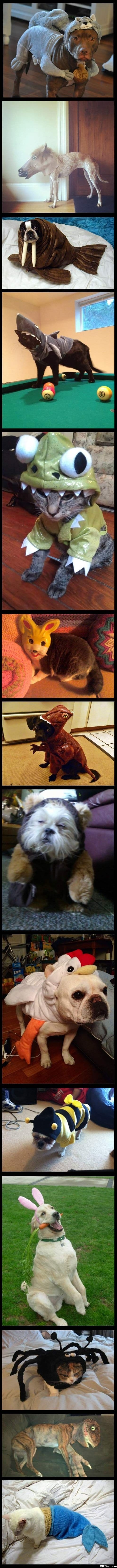 LOL - Animals dressed as other animals