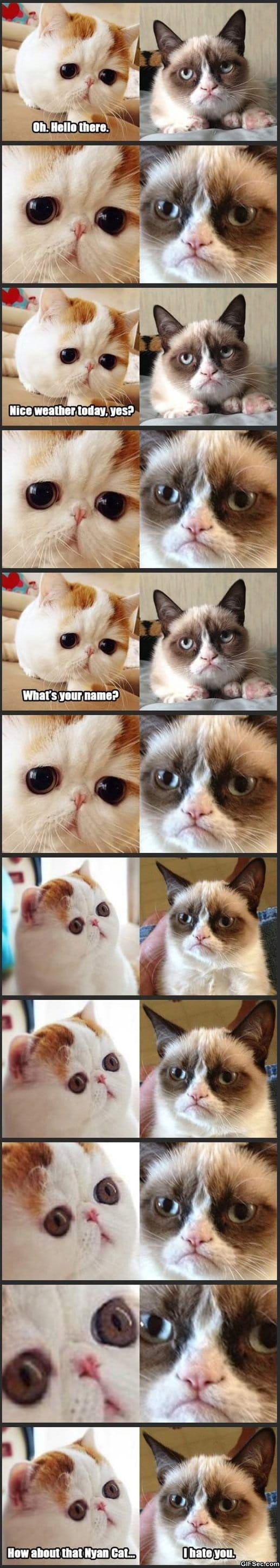 LOL - Snoopy Cat Meets Grumpy Cat