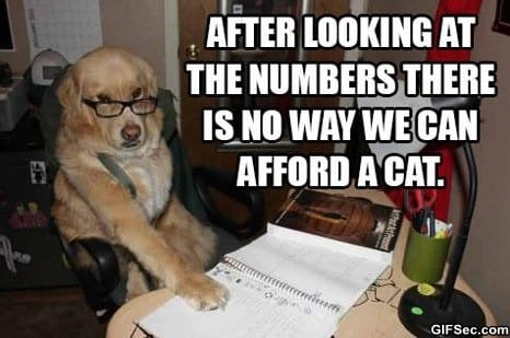 lol-we-cant-afford-the-cat