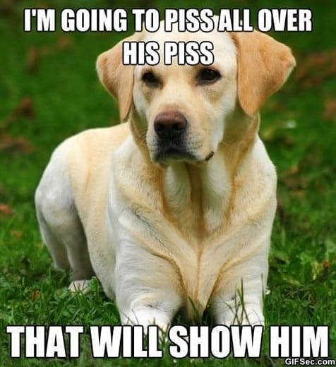 meme-canine-logic