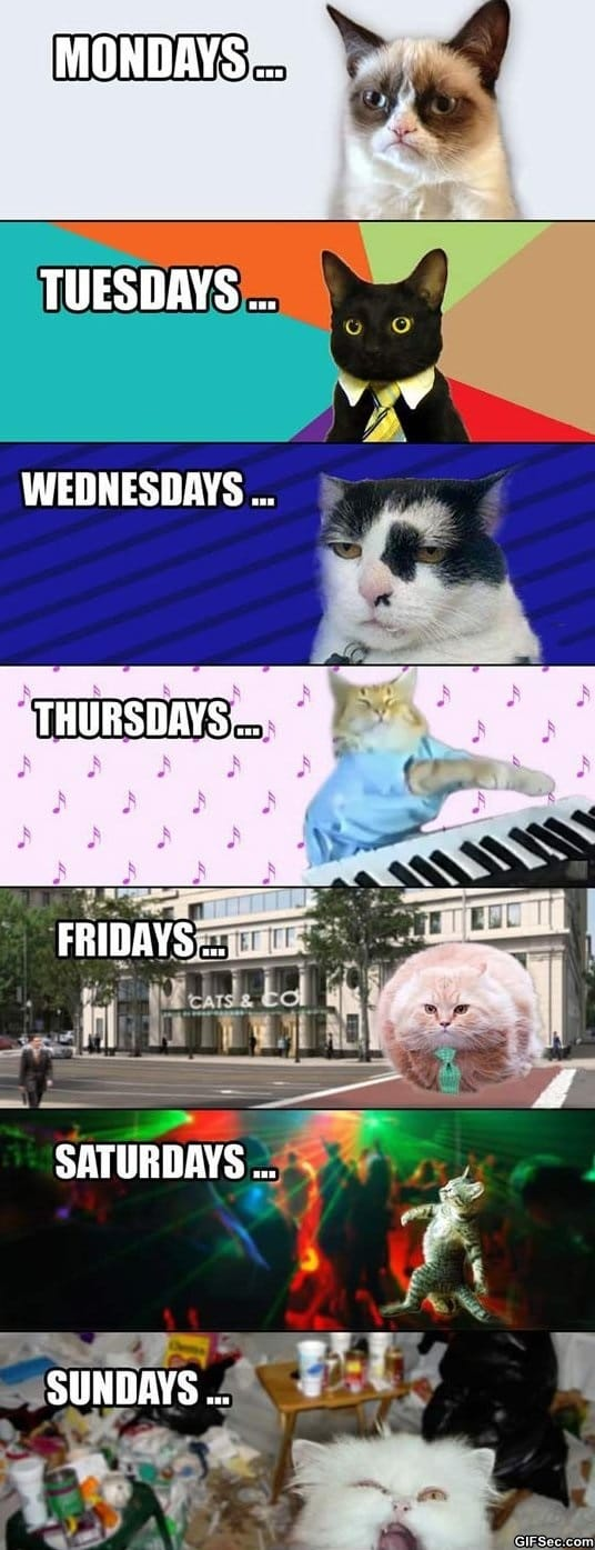 meme-my-week-explained-by-cats