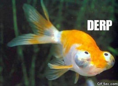 Derp goldfish