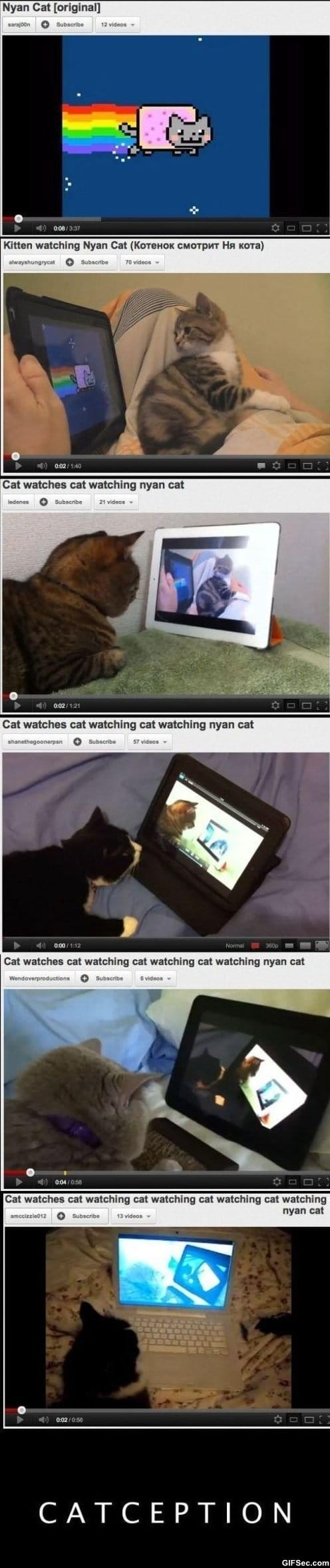 Funny - Catception