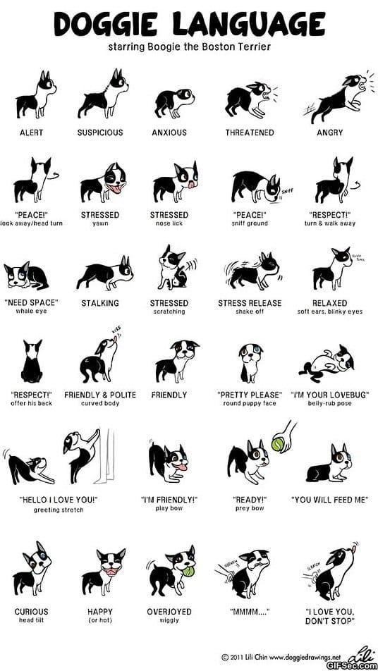funny-doggie-language
