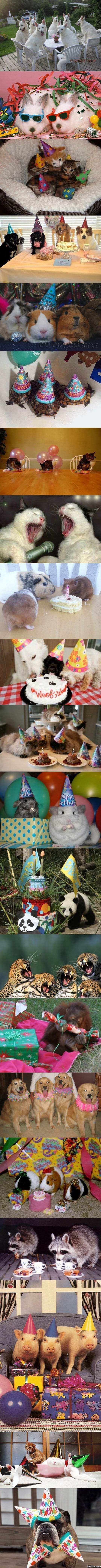 Funny - Funnest animal parties ever