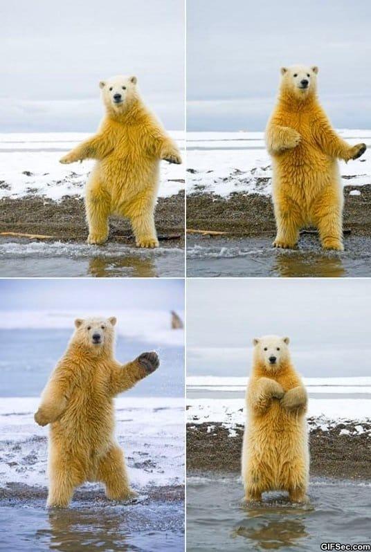 funny-polar-bear-dancing