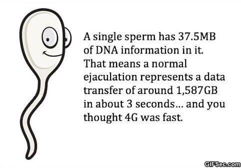 LOL - Fact
