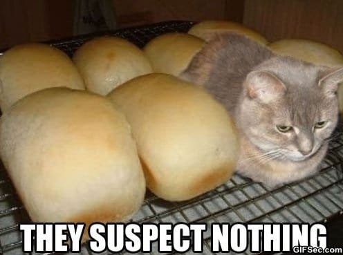 LOL - Undercover Kitten
