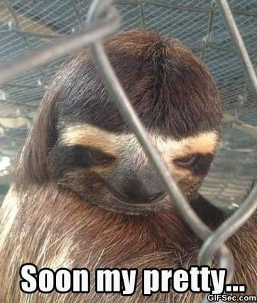 creepy-sloth
