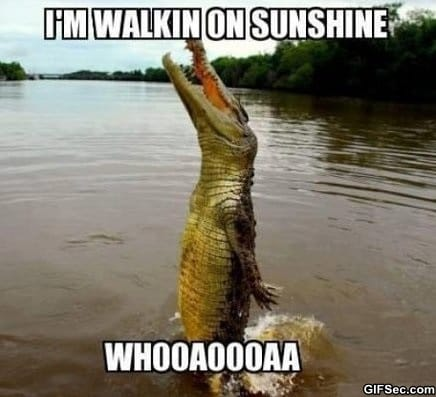 funny-happy-alligator