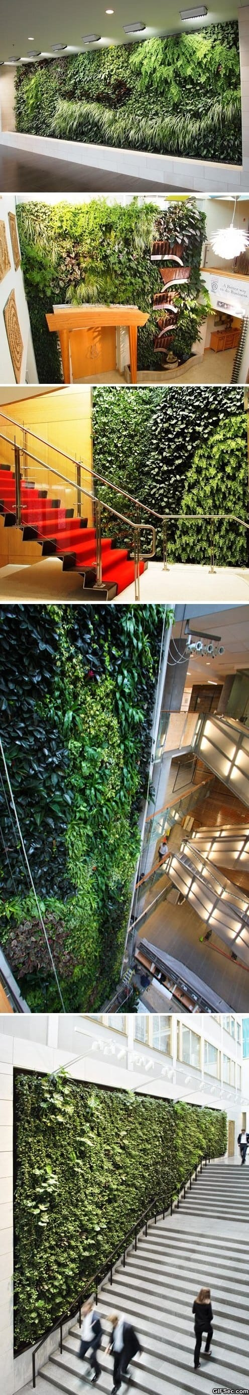 Funny - Living walls art