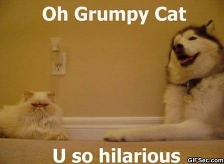 Funny - Oh grumpy cat