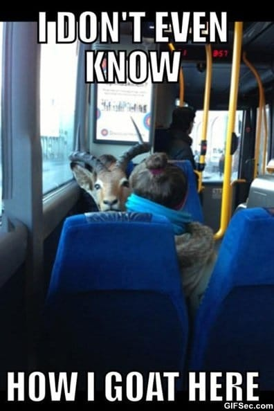 funny-saw-a-goat-on-a-bus-today