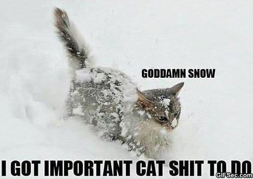 Funny - Snow