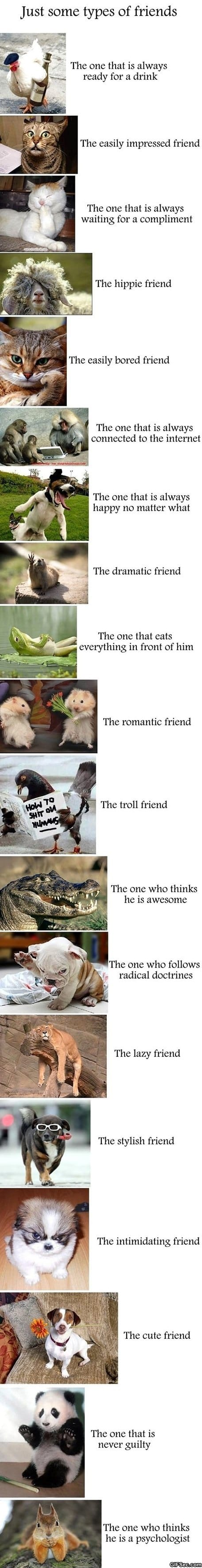 funny-some-types-of-friends