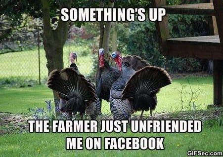 Funny - Suspicious turkeys