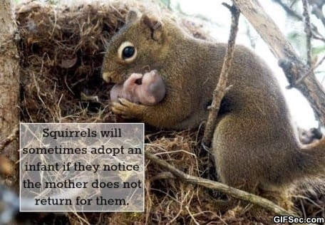 Funny - The kindness of squirrels