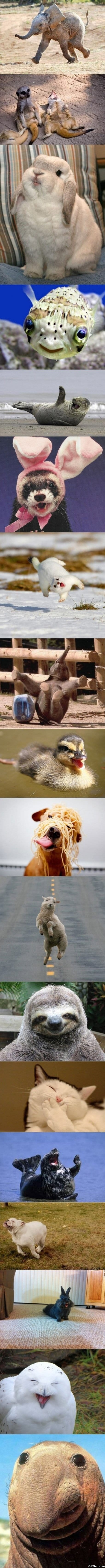 Funny - Worlds happiest animals