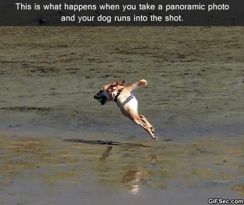 funny-panoramic-photo