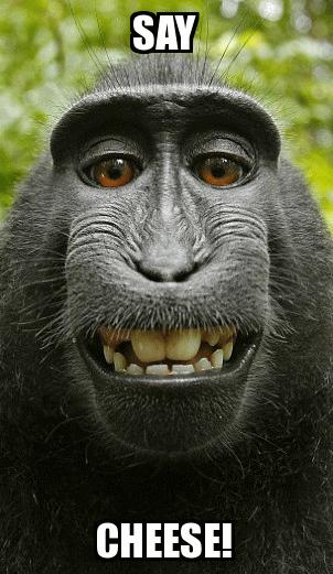 Happy Monkey!