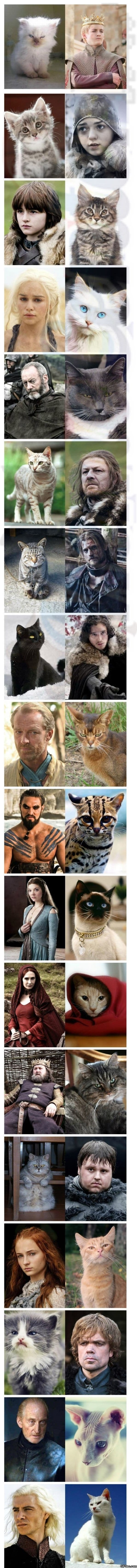 Game of thrones vs. Game Of Cats