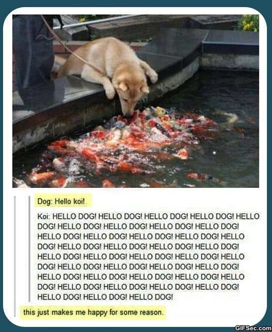 funny-pictures-hello-koi