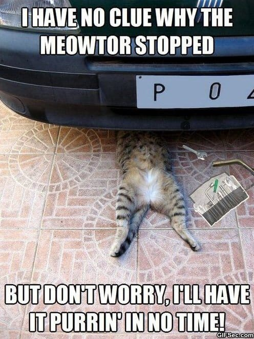 meme-auto-repair-cat