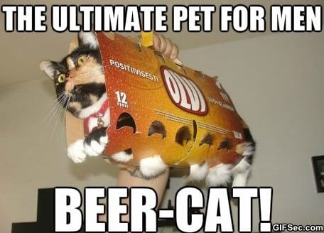 MEME - Beer-cat