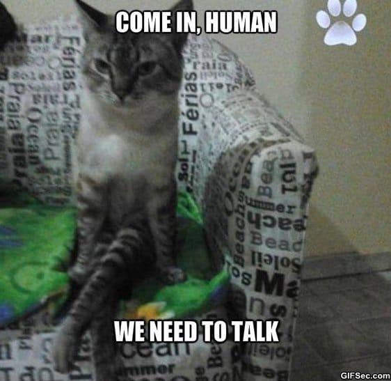 Meme we need to - Random things every house needs ...