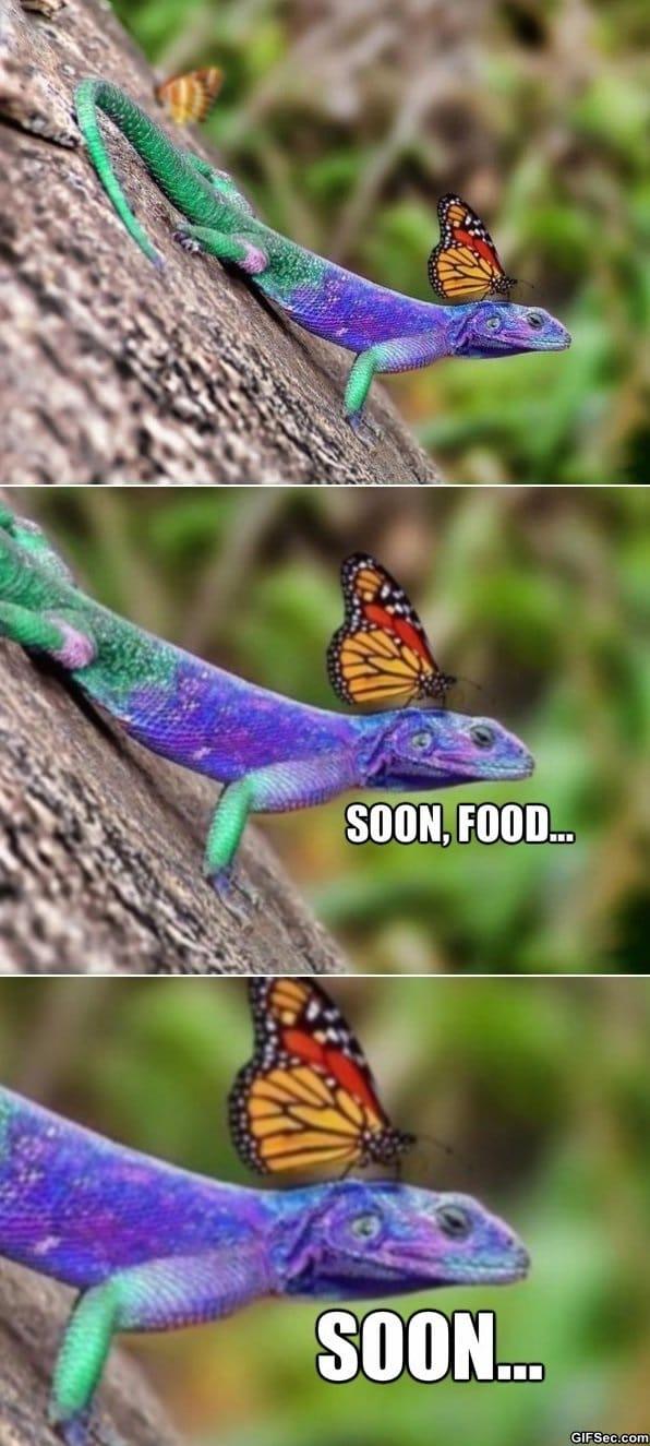 Fabulous Lizard