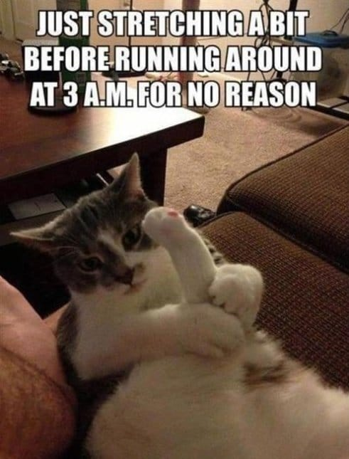 Morning Workout Meme Funny : Funny cat doing his nightly stretches meme g