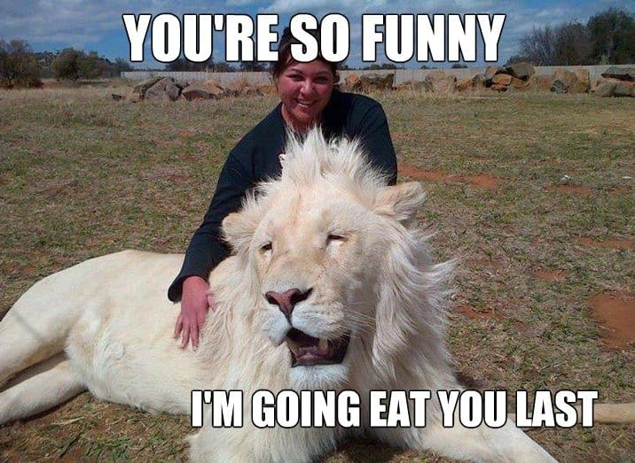 Lol So Funny Meme : Funny happy lion meme lol g