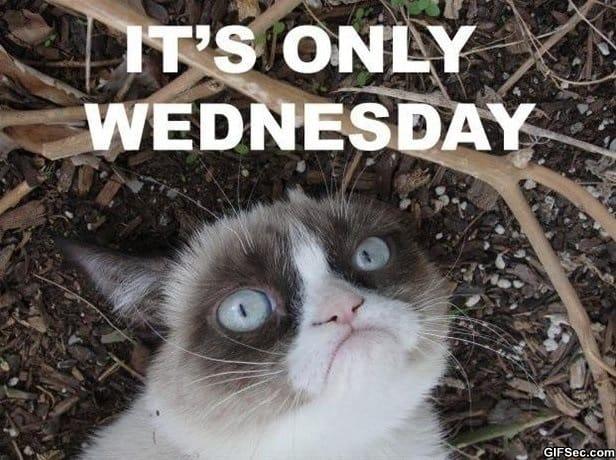 Funny Animal Wednesday Meme : Wednesday meme and lol g