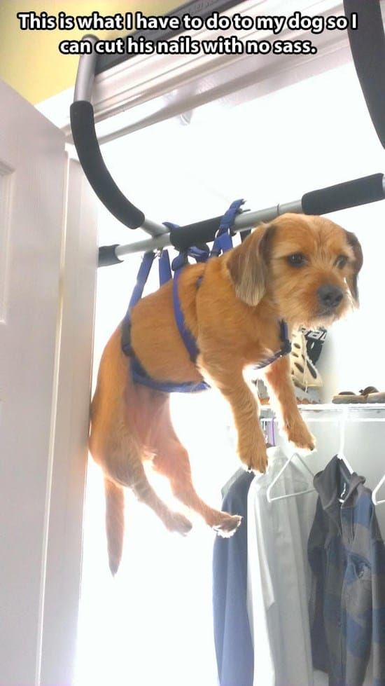 Dog Nail Clipping Service