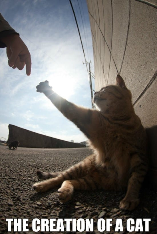 LOL Cats 2014