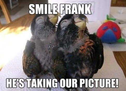 smile-frank