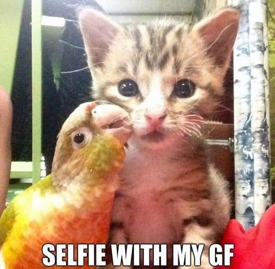 Funny Selfie Meme