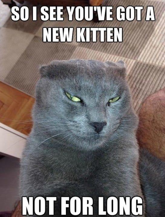 Funny devious cat meme jokes 2014