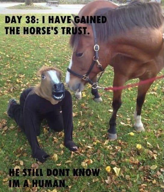 Horse jokes - photo#23