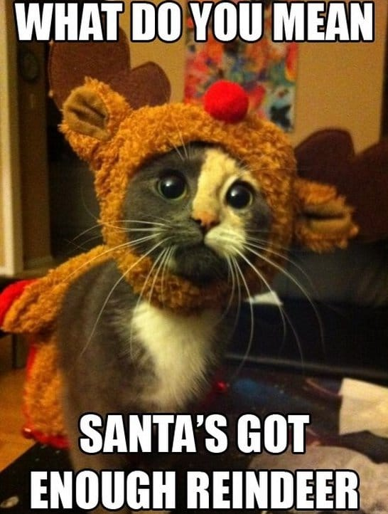 Funny Christmas Memes For Friends : Meme christmas kitty g