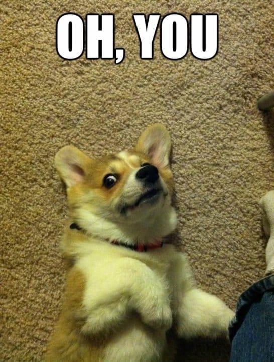 Oh you dog gif