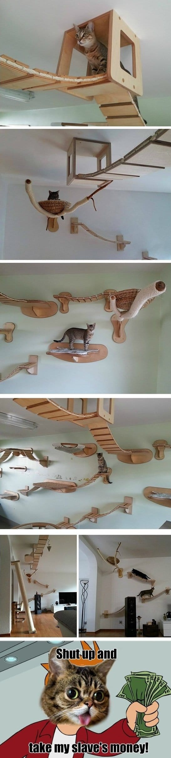 funny cat furniture meme