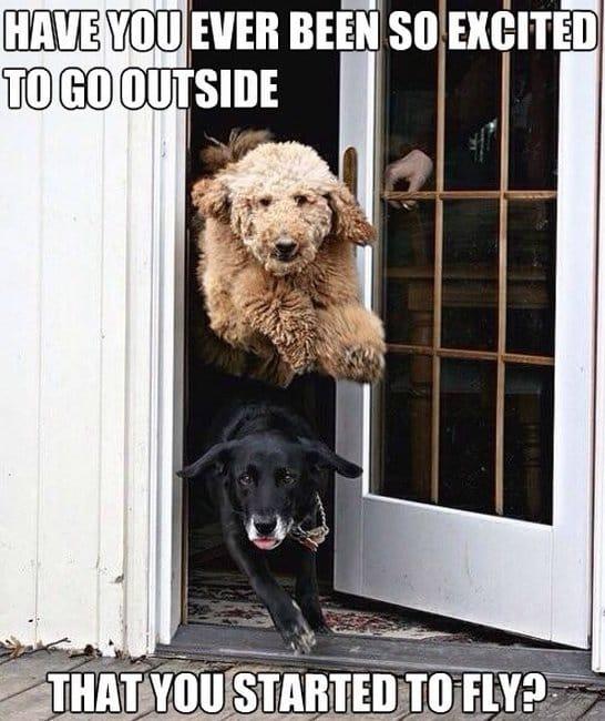 Funny Dog Joke Meme : Funny excited dog pictures meme jokes g