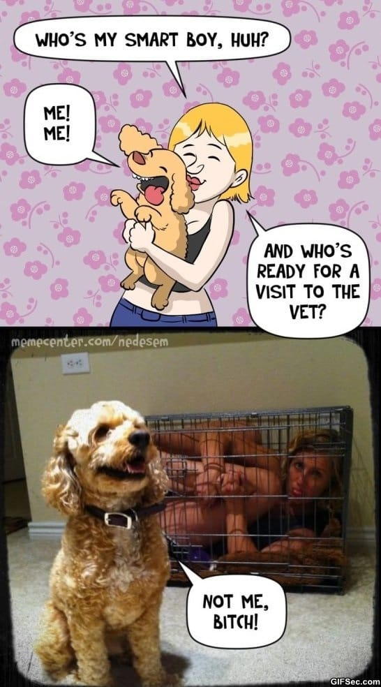 funny-pictures-boundaries