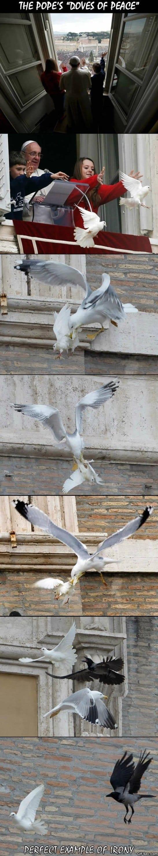 funny-gif-dove-of-peace