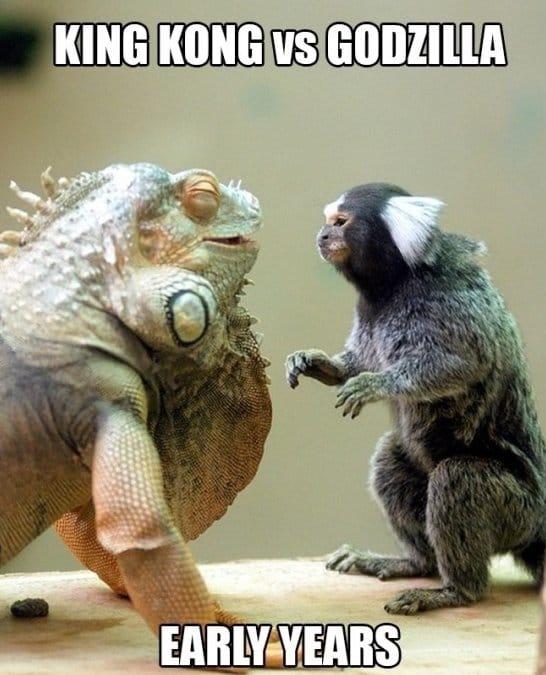 Funny-MEME-King-Kong-vs -Godzilla jpgGodzilla Vs King Kong 2014