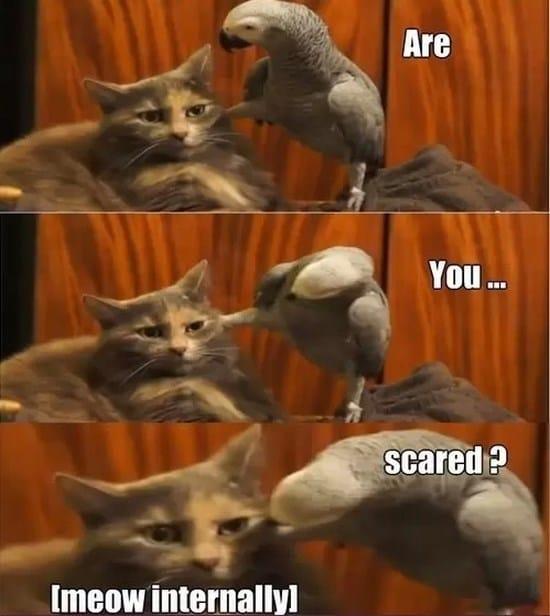 badass-parrot