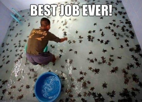best-job-ever